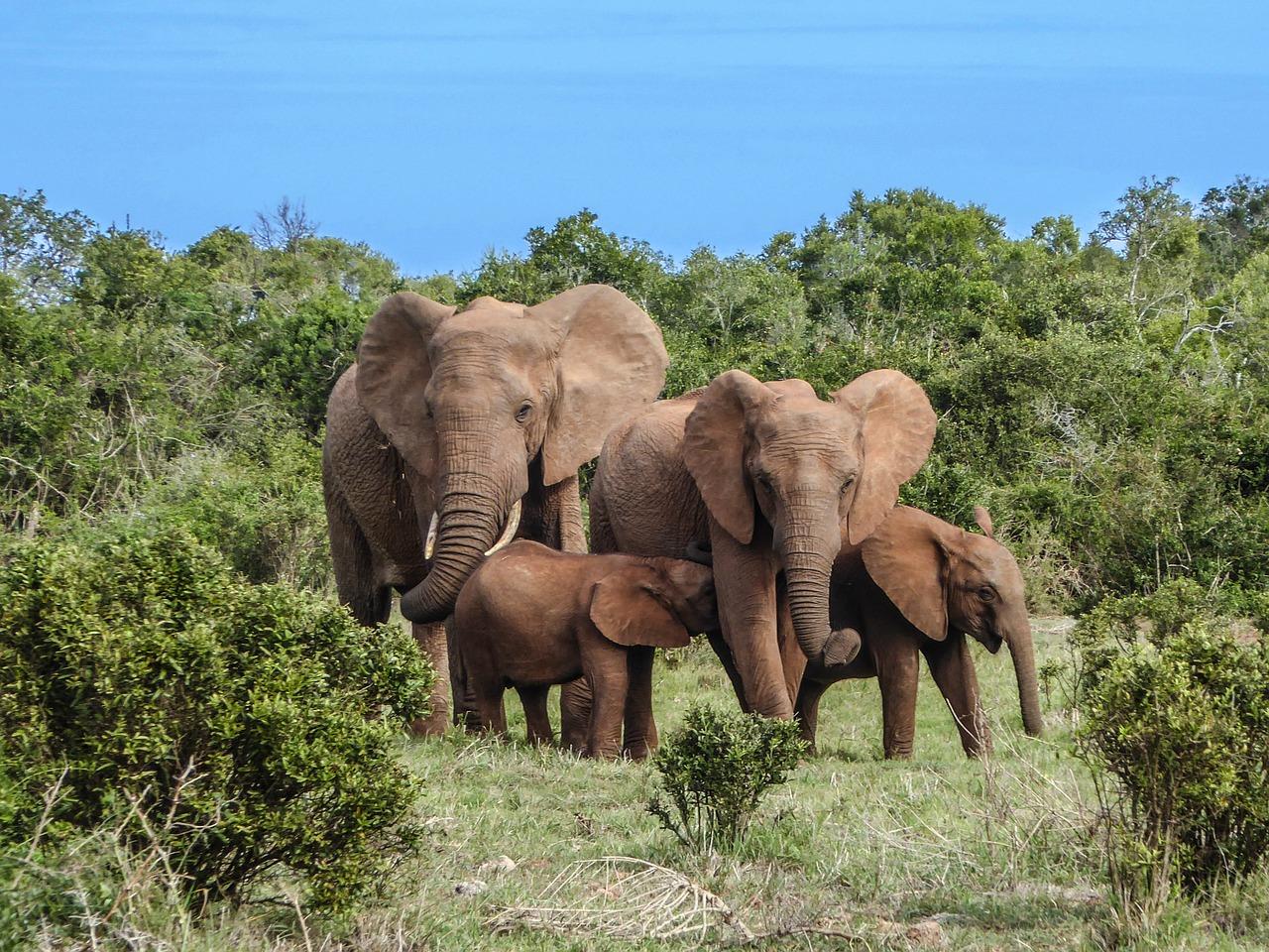 Eléphant de forêt d'Afrique – Tous les animaux