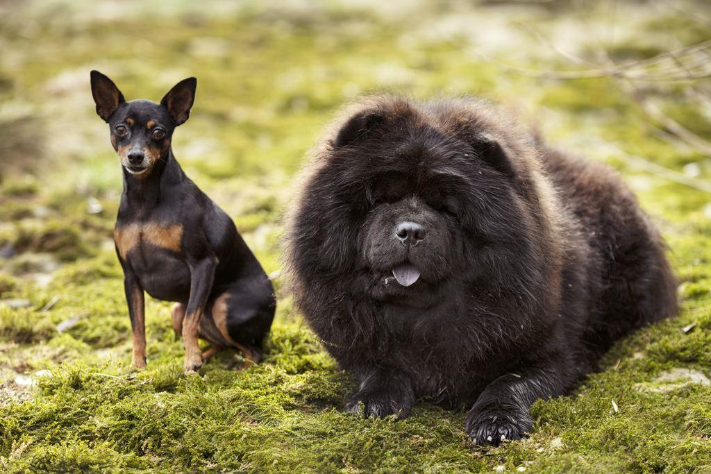 chien dans la nature canis lupus familiaris