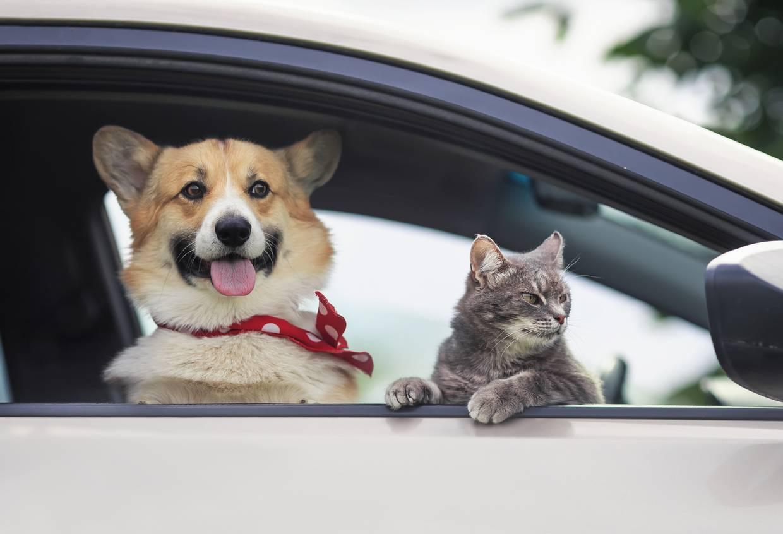 chien et chat vacances
