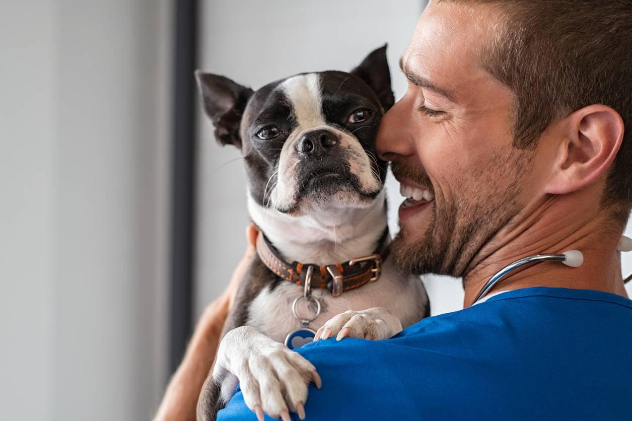 soin assurance santé animaux