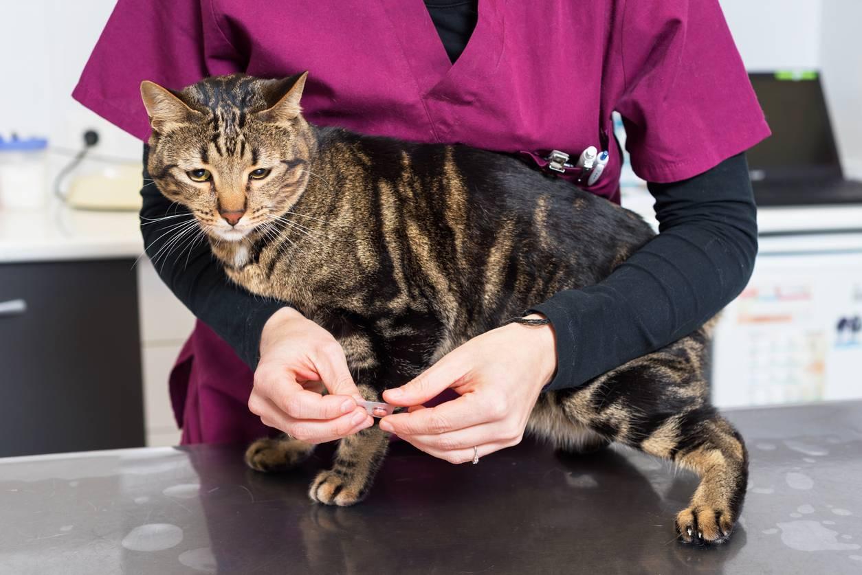 vétérinaire vermifuge chat