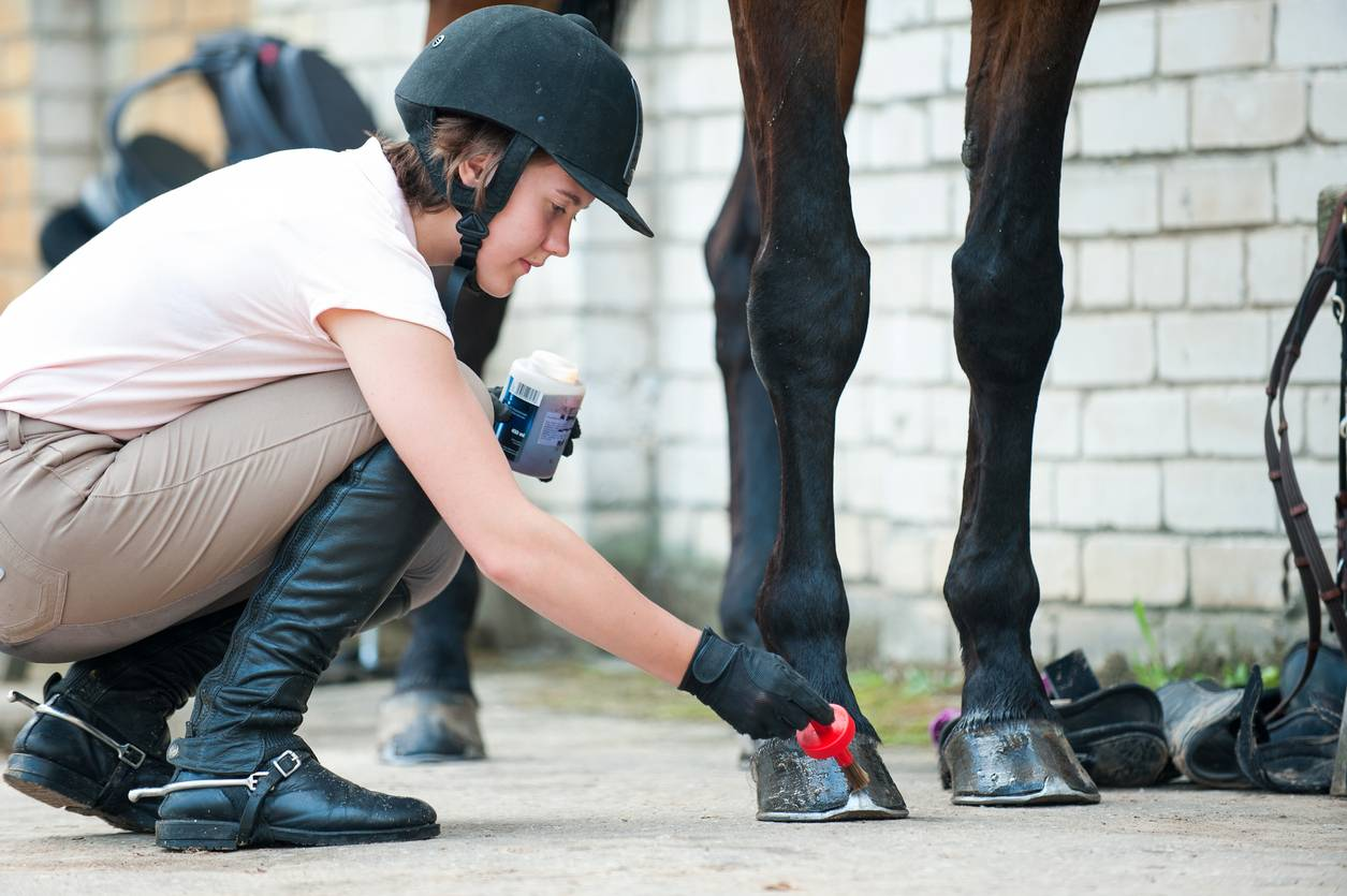 engorgement cheval vétérinaire équin
