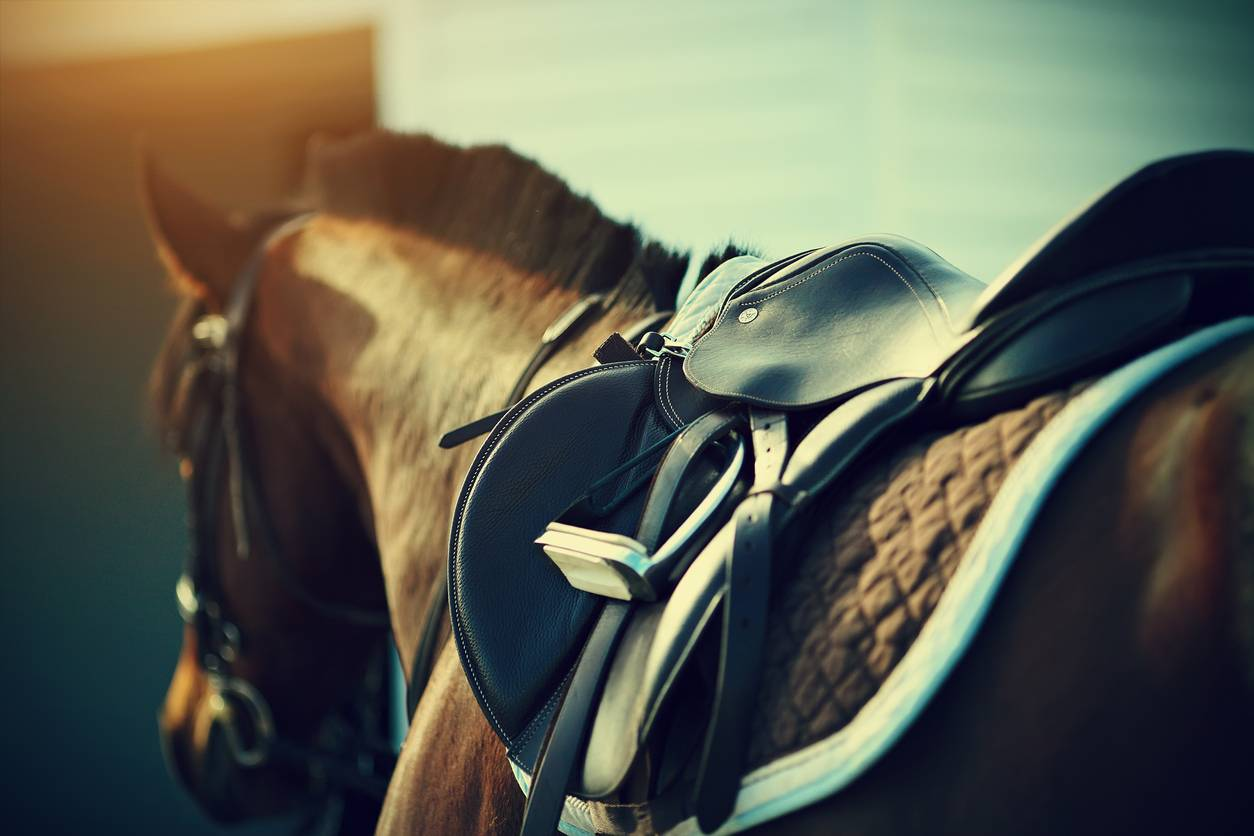 selle adaptée au cheval